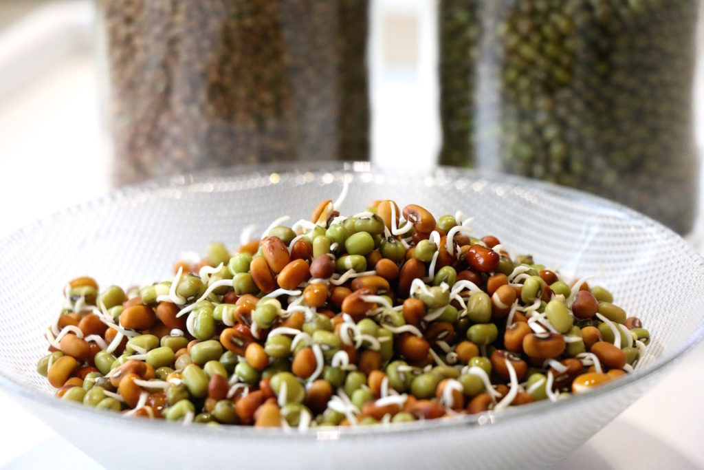 how to sprout seeds, nuts, beans, legumes and grains, sprouting at home