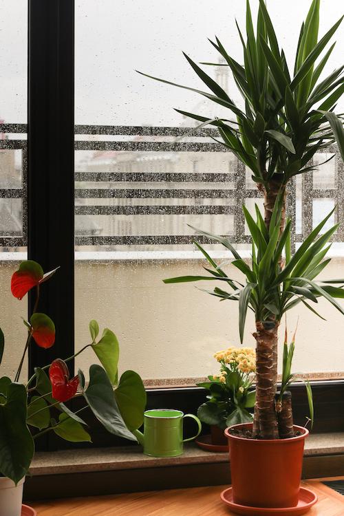a rainy day in Bucharest