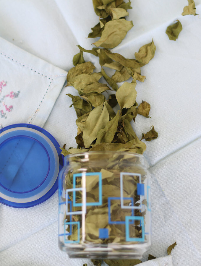 how to preserve fresh curry leaves, kadi patta