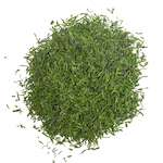 dill weed in hindi suva