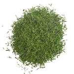 dill weed in hindi suva