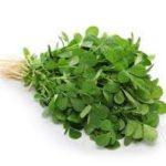 fresh fenugreek leaves methi