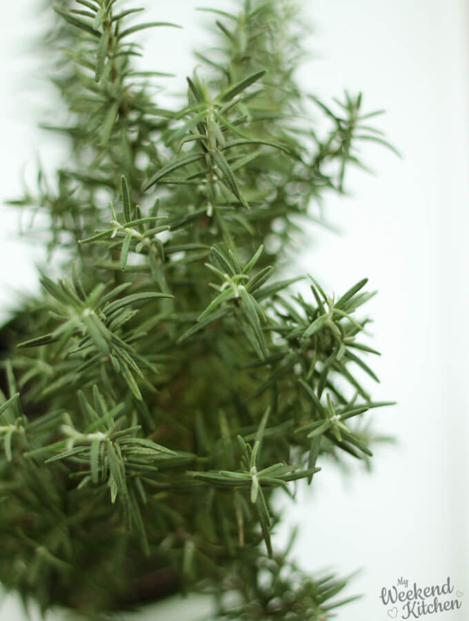 fresh rosemary plant kitchen gardening