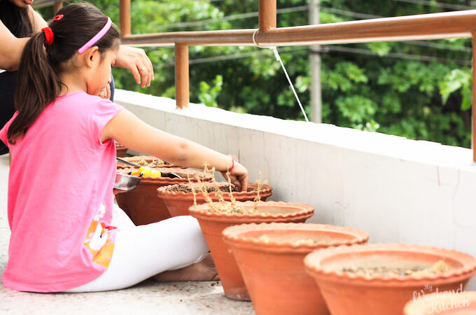 gardening with kids, grow your own food