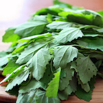 bathua leaves in english chenopodium album