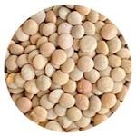 Indian brown lentils in Hindi kali masoor