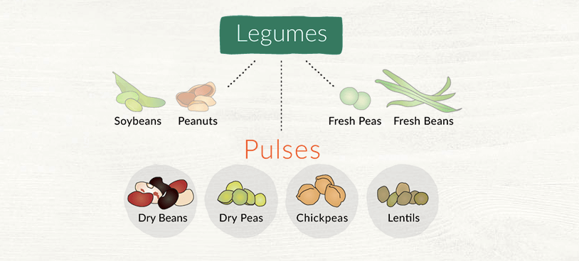 Difference between Lentils, Beans, and Pulses